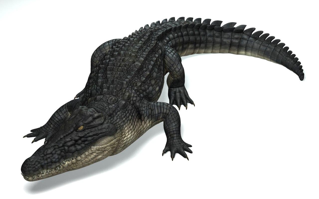 crocodile croc 3D model