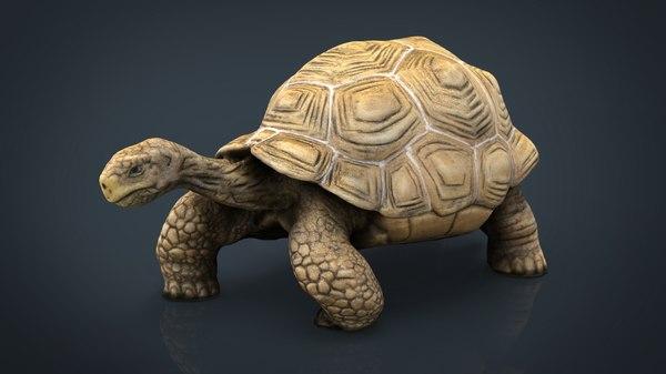3D giant tortoise model