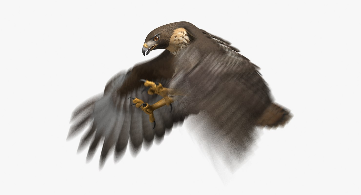 red-tailed hawk animation tail model