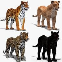 big cats 3D model