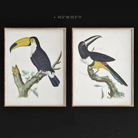 3D jonathan barraband toucans model