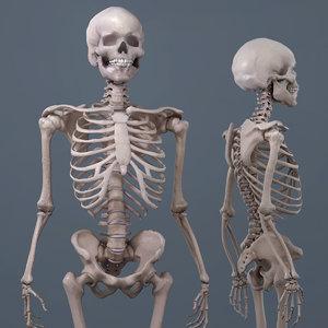 realistic human skeleton 3D model