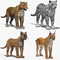 3D big cats