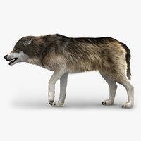 3D wolf 3 fur