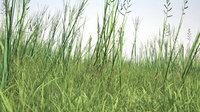 plant grass growfx model