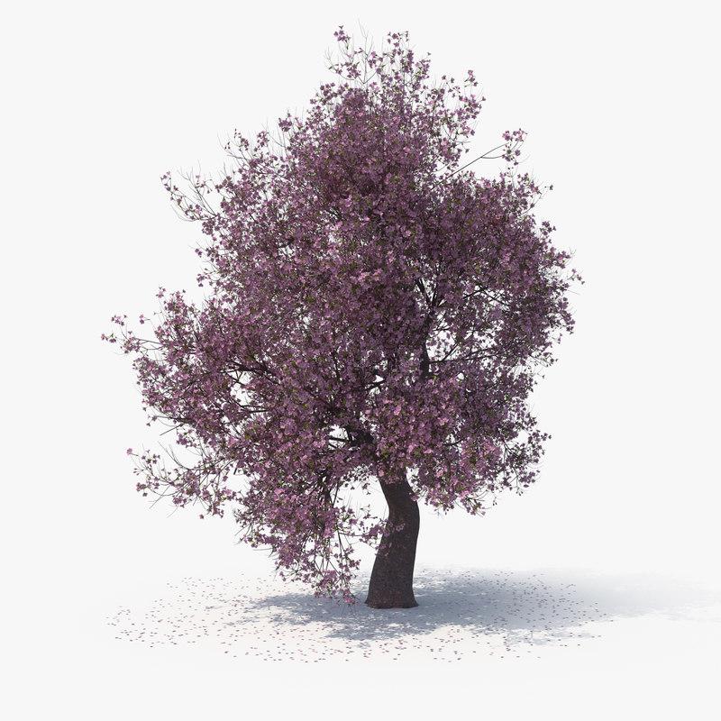 blossom tree 04 3D model