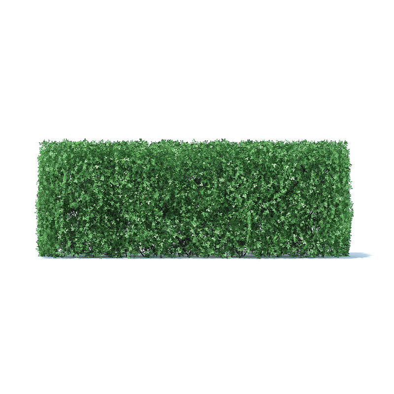 straight hedge 3D