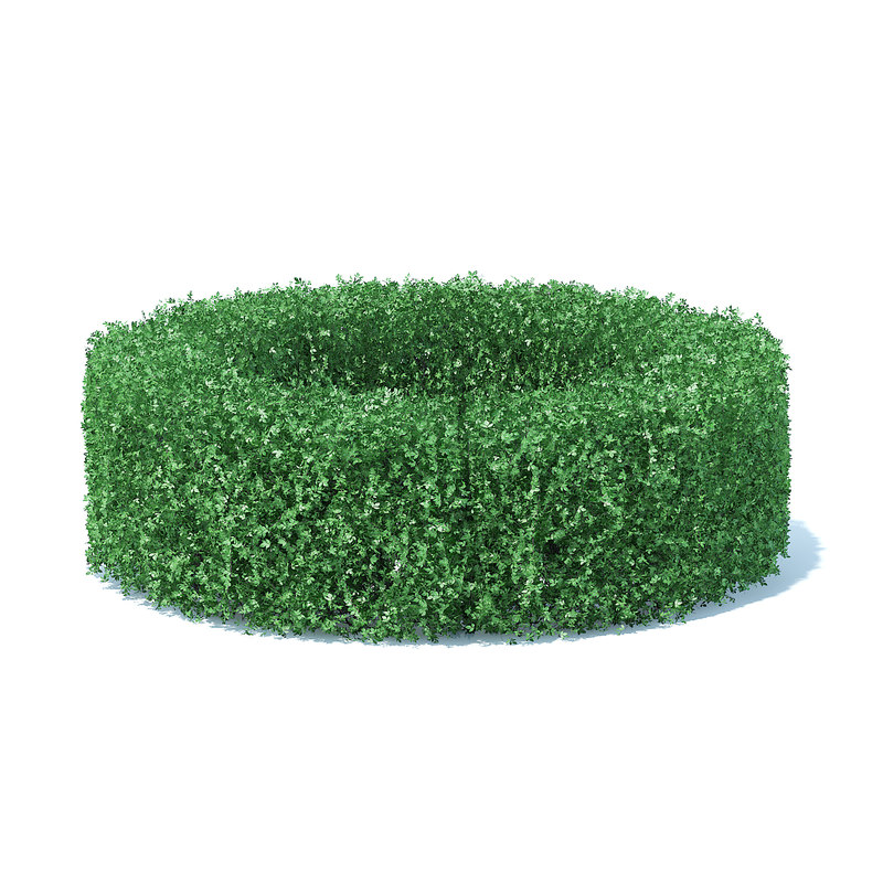 circle shaped hedge model