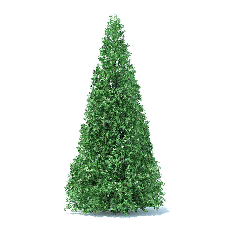 cone shaped hedge 3D model