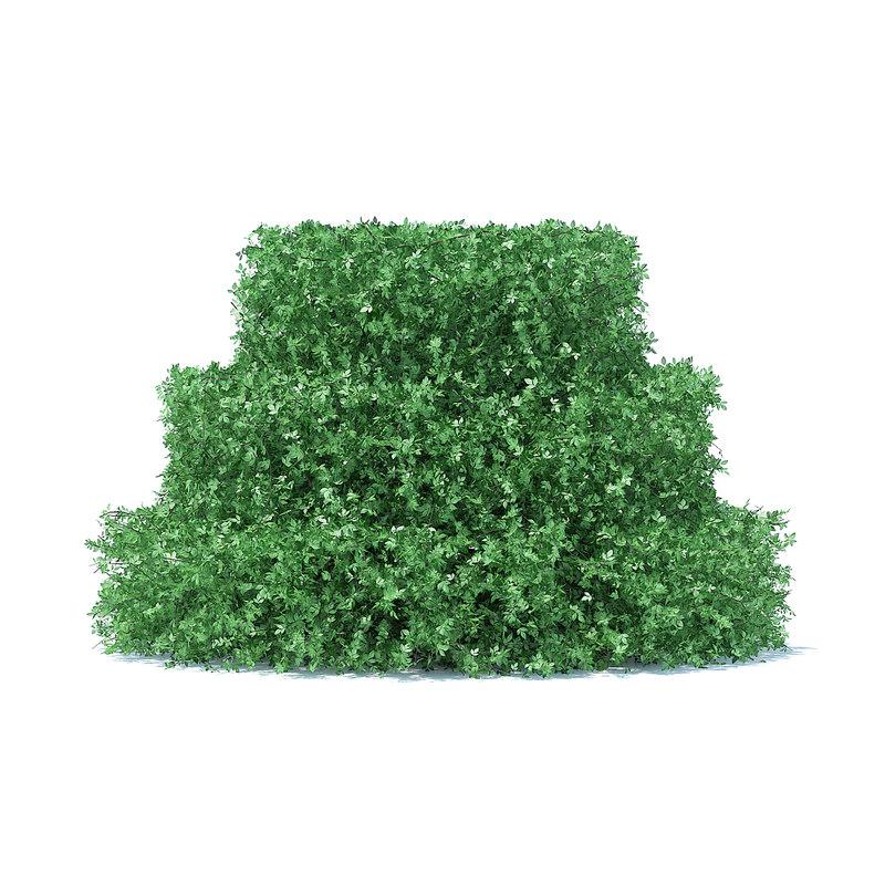3D cake shaped hedge model