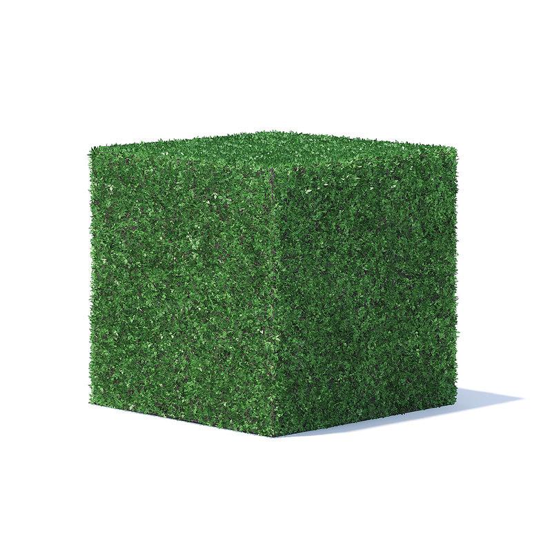 3D cube shaped hedge model