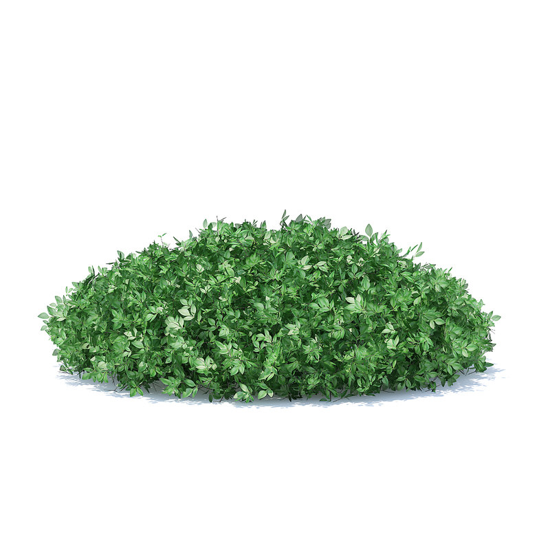 3D model short hedge