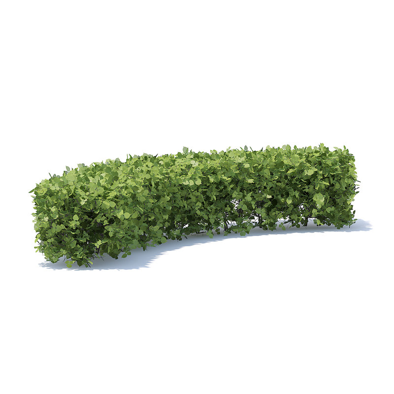 3D model curved hedge