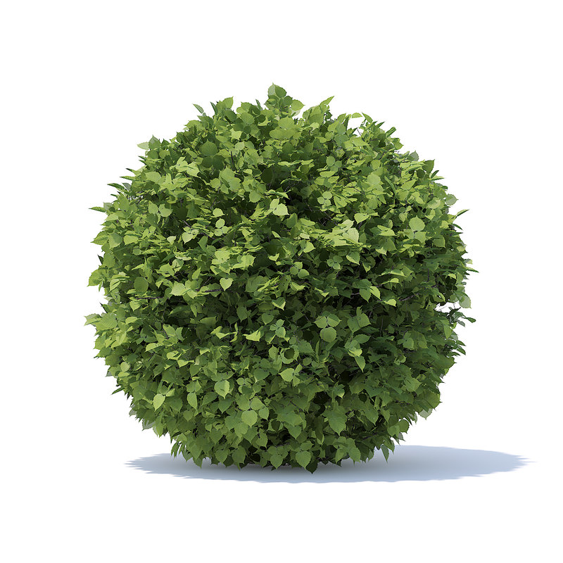 3D spherical hedge model