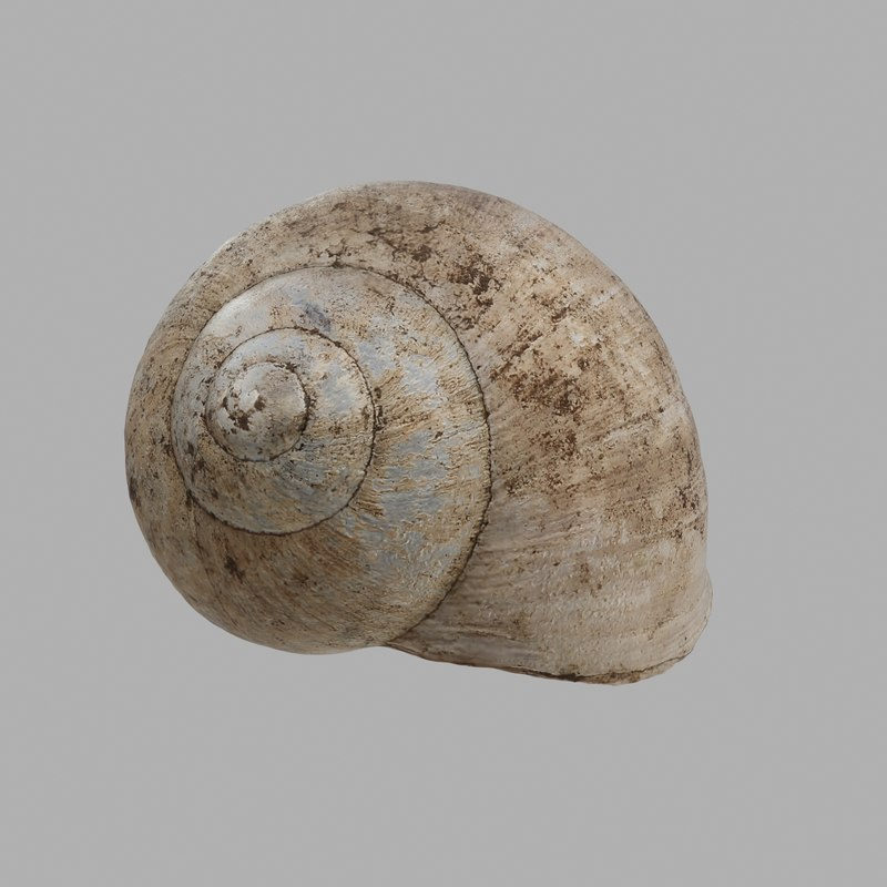 3D snail shell