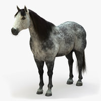 horse dapplegrey model