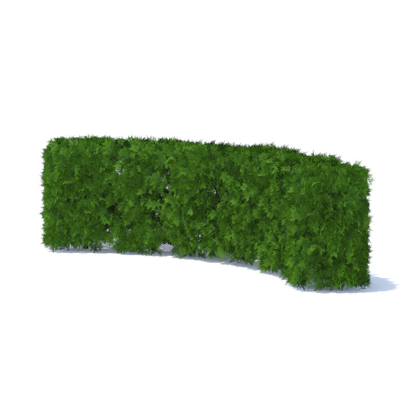 curved thuja hedge 3D model