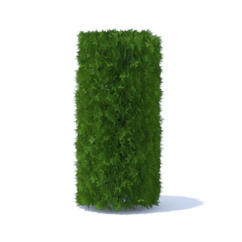 3D cylindrical thuja hedge model