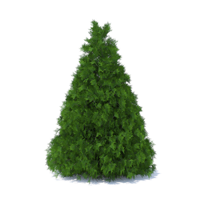 3D cone shaped thuja hedge