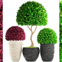 topiary trees buxus 3D model