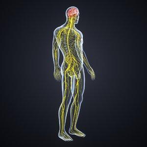 brain nervous 3D model