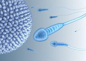 sperm inner structure details 3D model