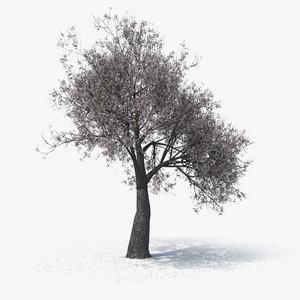 blossom tree 05 3D model