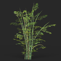 Game Ready Bamboo Tree