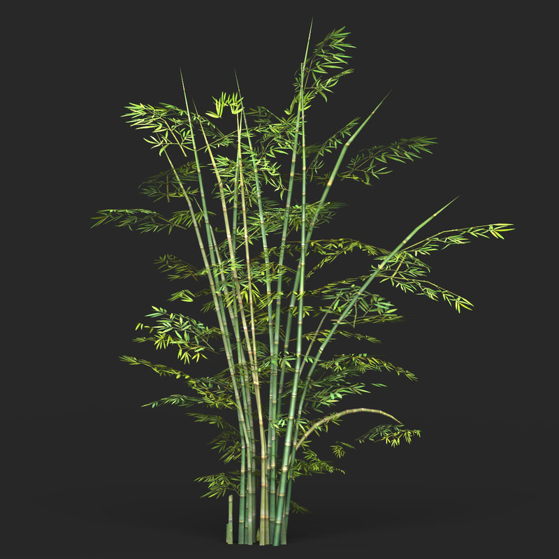 ready bamboo tree games 3D model