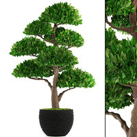 3D bonsai tree model