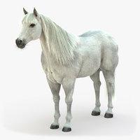 horse white 3D