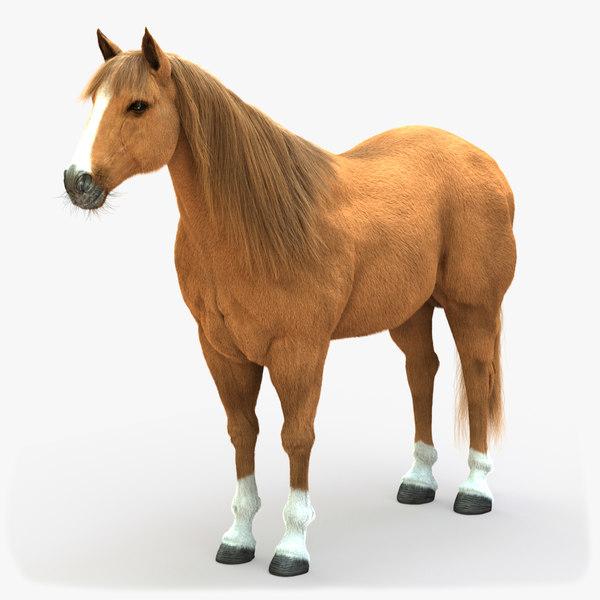 horse lightbrown 3D