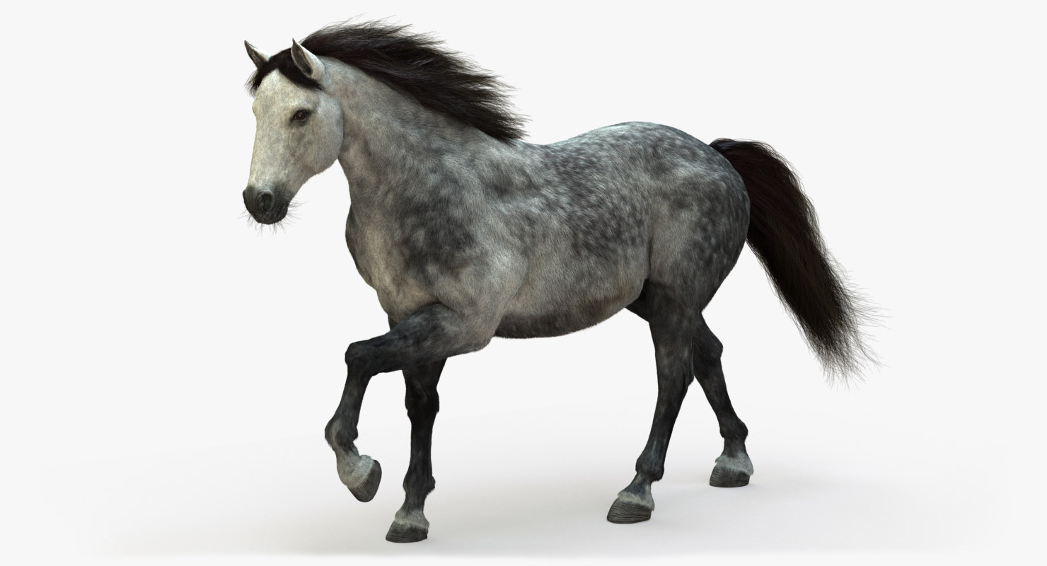 3D model horse animation fur