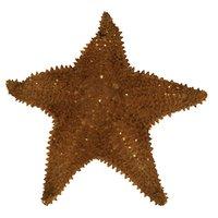 fish star starfish 3D