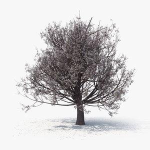 3D model blossom tree 06