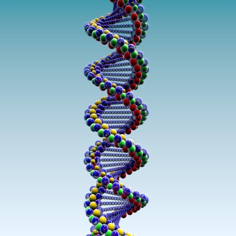 Image result for dna model 3d