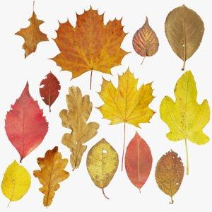 autumn leaves model