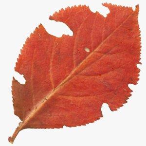 autumn leaf 3D