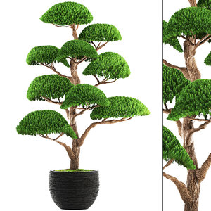 3D bonsai tree