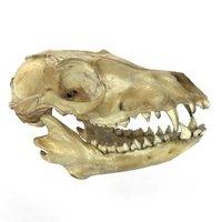 fox skull 3D