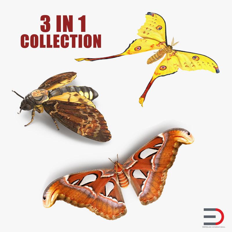 3D model moths set atlas