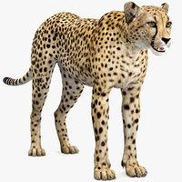 3D Cheetah