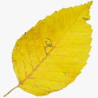 autumn leaf 3D model
