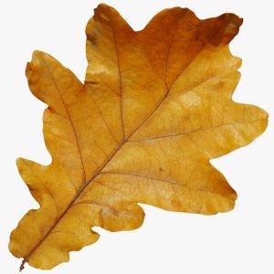 3D autumn leaf