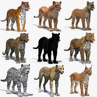 3D big cats 03 model
