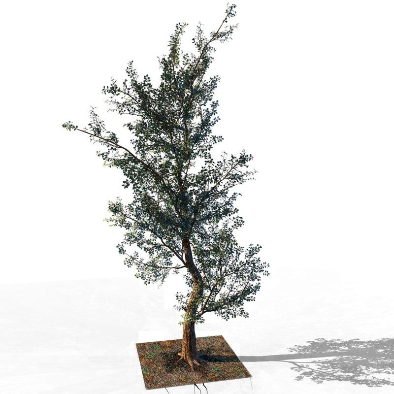 tree trunk 3D
