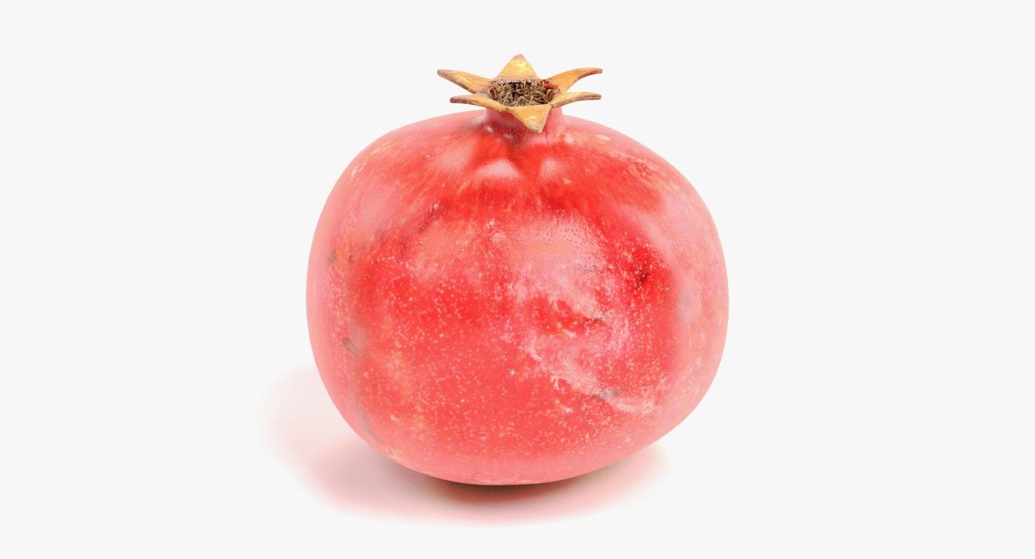 pomegranate punica granatum model