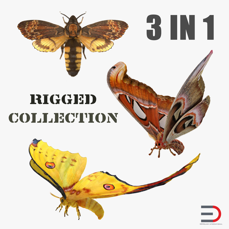 3D rigged moths