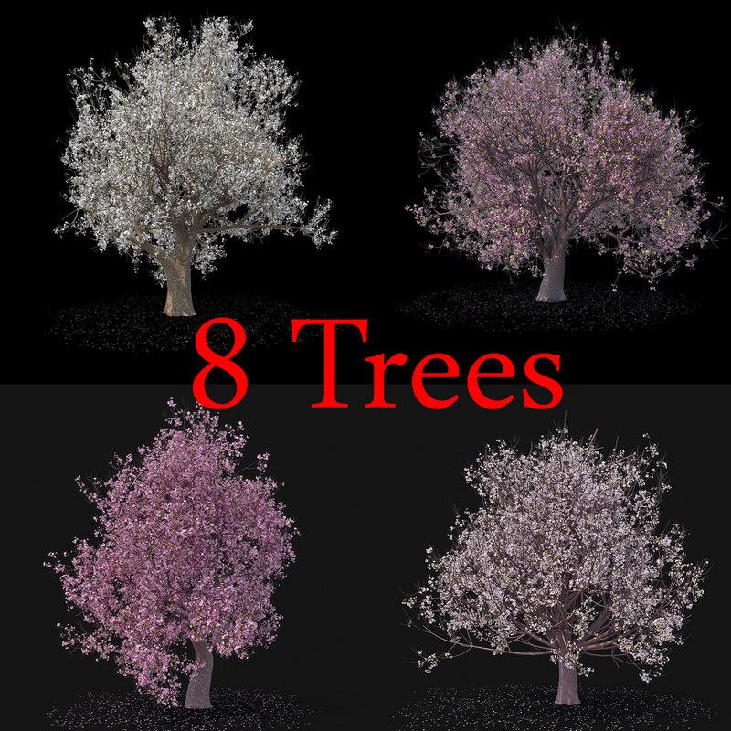 blossom tree 3D model