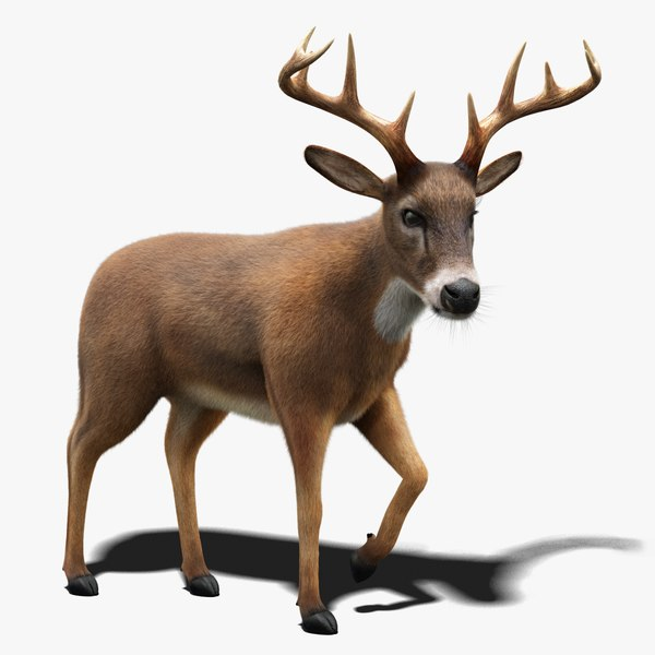 deer fur animation 3D model
